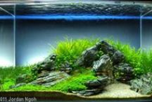 Aquascaping and fish tanks / Ideas for aquascaping and shrimp fish tanks