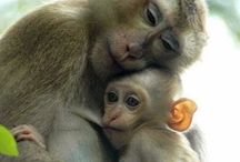 Animal Parents With Babies / Unconditional love of animals for their young