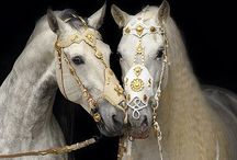 HORSE.. / Equine beauty