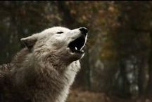howling at the moon / Wolves and stuff like that