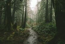 Into the woods || wild thing