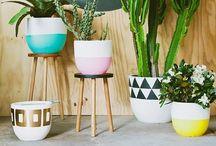Plants / We LOVE Plants!