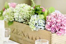 Flowers: Hydrangea | hortensia