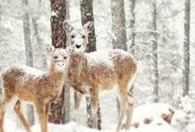 animals and the snow