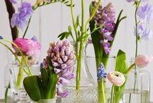 Flowers: Hyacinth