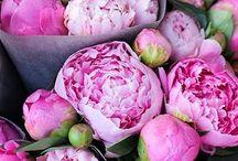 Flowers: Peonies | pioenen / Bij een mooie bloem hoort een mooie symboliek. De pioenroos staat symbool voor liefde, een gelukkig leven en gezondheid. Wist u dat er wel duizend soorten pioenrozen verkrijgbaar zijn, in allerlei vormen en kleuren? Met een enkele rij bloemblaadjes bijvoorbeeld, half dubbele of dubbele bloemen. Ook qua kleur kunt u uw hart ophalen, want de pioen is er in het geel, wit, roze of rood.