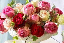 Flowers: Roses | rozen