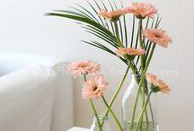 Flowers: Gerbera
