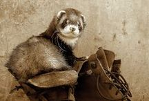 :3 / Ferrets & other Cunha
