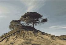 Nature gif / animations
