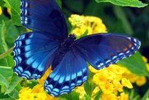 Butterfly εїз / εїз __Butterfly Photo__ εїз