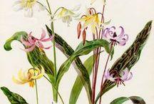 *** Botanical print