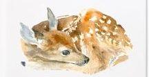 Animals Creativity / Illustrations - Patterns - Elements