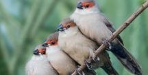 bird / My heart is like a singing bird   (Christina Rossetti) #bird #birds