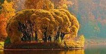 Autumn / fall / #autumn # travel #leaves #autumnleaves