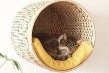 Alles für die Katz' ;)