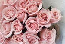 Pink flowers ♥ ✿⊱╮