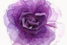 Purple flowers ♥ ✿⊱╮