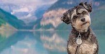 dog / #dog
