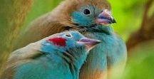 Bird couples / #bird #birdcouples #2birds #twobirds #birdsinlove