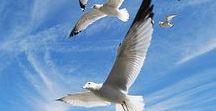 Born to F L Y / birds in flight