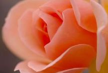 Apricot & Peach Flowers ♥ ✿⊱╮