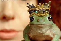 the Frog Prince / In Search of Prince Charming ... #frog #toad #paintedfrog #orientaltoad #canetoad #commontoad #goldenfrog #thefrogprince #treefrog #poisonfrog #amphibiants #animal