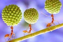 Ants / Ants have the most complicated social organization on earth next to humans. (E. O. Wilson) ..... #ant #ants #macro