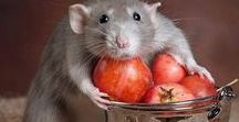 Mouses and Rats / #mouse # rat