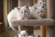 white Cats