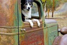 Animal Images I Love / by Christine Bletcher