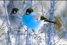 Winged Beauties / Beautiful birds!