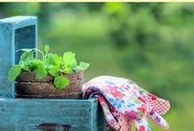 Garden Fabulousness / Do you love to garden? Here are simple trips and tricks to plant the best vegetable garden this spring! Also included are tips to get your kid's involved in gardening.