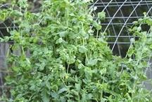 Indoor/outdoor gardening