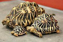 Animales disecaos y tortugas