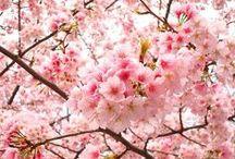 """Sakura Accesorios / Visiten mi pagina de facebook y den """"MG"""" Bellas cosas para regalar o regalarse. Hago a pedido, su pregunta no molesta! https://www.facebook.com/sakuraaccesorios0"""