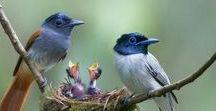 Wow Birds