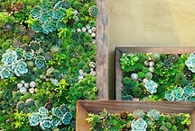 Succulents / by Smith's Acres LLC