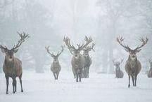 beautiful WINTER WONDERLAND / wonderful old season picture I like