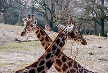 Emmen zoo 2014 / 27 maart 2014