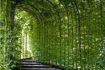 Zahrada, příroda...