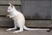 wit | white | blanc | bianco | blanco | weiss