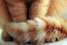 Kitty cat's