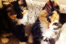 Adoptable Cats / Cats currently available for adoption @ Suncoast Animal League.