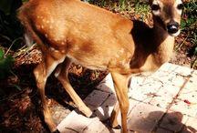 Wildlife / Wildlife we have helped @ Suncoast Animal League