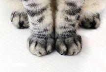 Gats i felins ♡