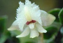 Orchideeën / Orchids