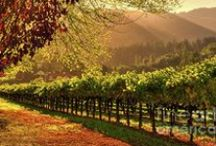 Napa & Sonoma Wine Region / Some of our favorite images and wineries in the nearby wine region.   Tip:  Ask our concierge about a day tour...