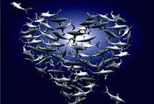I ♥ Sharks!!! / Anything Shark!! / by Kelly Fisher