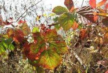 Podzimní nálady / moje láska - PODZIM